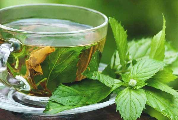 چای-گزنه-خاردار.jpg