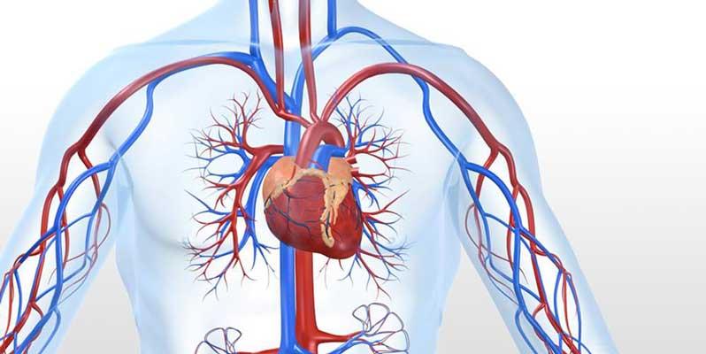 شریان قلب