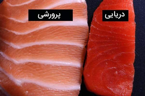 تفاوت ماهی سالمون آزاد با پرورشی