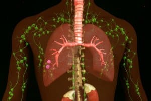 proven benefit of fasting immune system